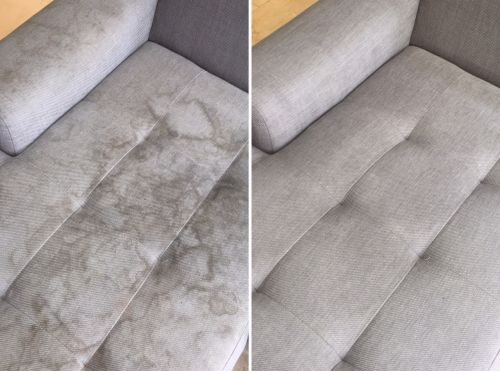 Dust Mites – The Bug Living Large On Your Upholstery
