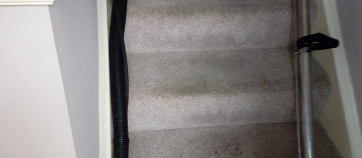 Keeping Your Carpet In Shape With Quality Cleaning Services