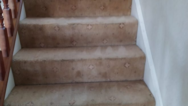 Why The Carpet Cleaning Is Key To Minimise Allergies