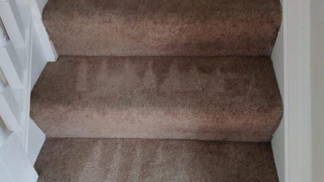 Preventing Carpet Mould